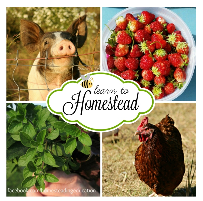 homesteading conference2